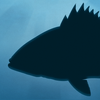 Fish Rules 图标