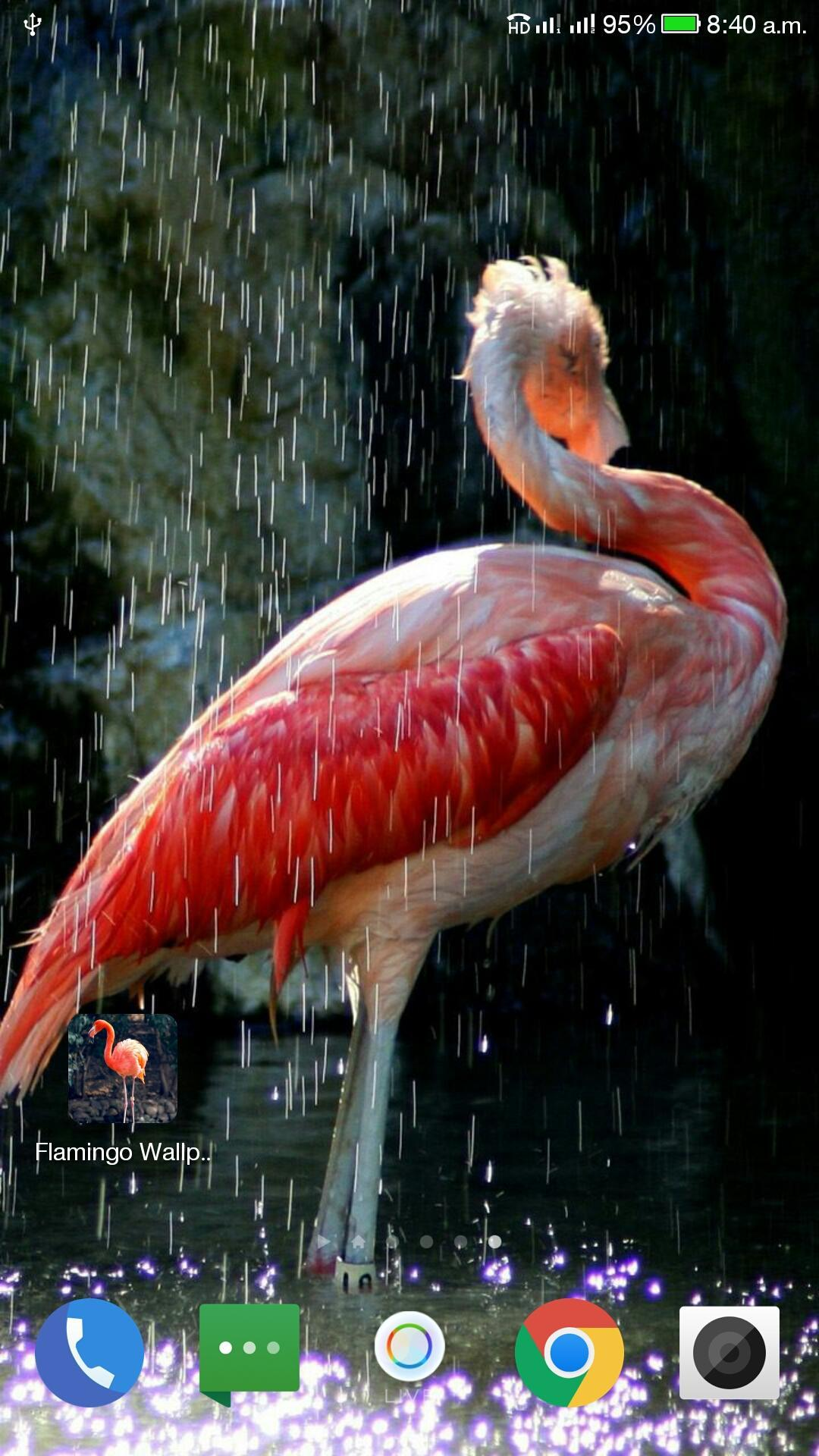 Flamingo Wallpaper Hd For Android Apk Download