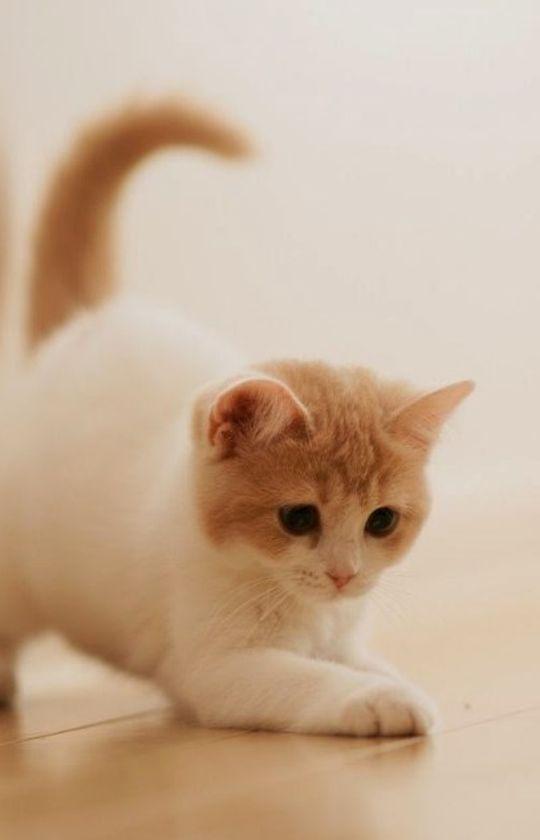 101 Gambar Foto Kucing Lucu Dan Gemesin Majalah Cat Dog