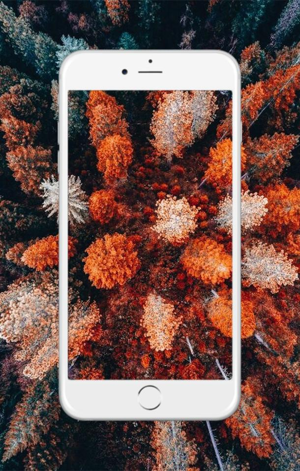 Fall Wallpaper Free For Android Apk Download
