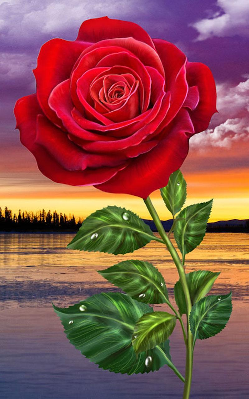 Hd Rose Flowers Live Wallpaper For Android Apk Download