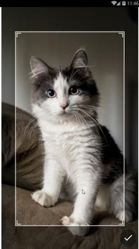 Kawaii Kitten Wallpapers Art screenshot 10