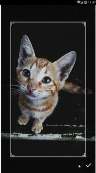 Kawaii Kitten Wallpapers Art screenshot 5