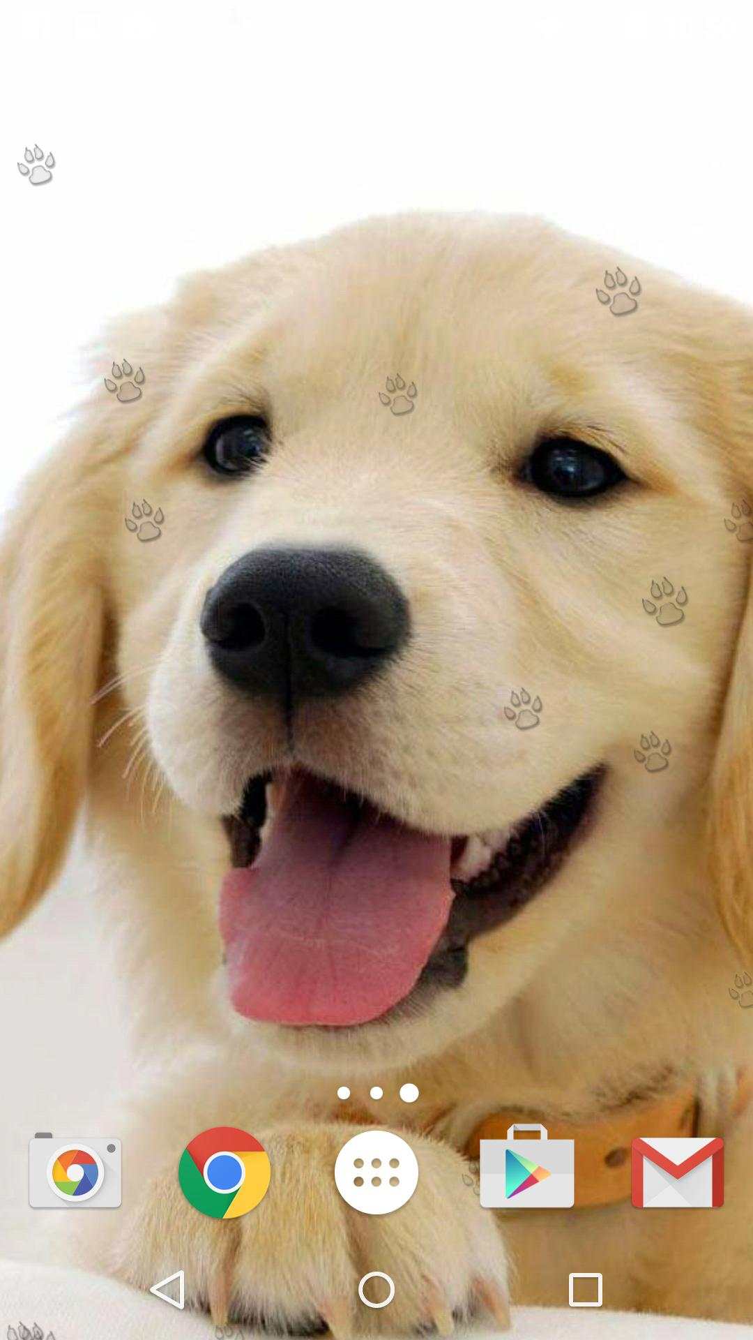 Cute Puppies Live Wallpaper For Android Apk Download