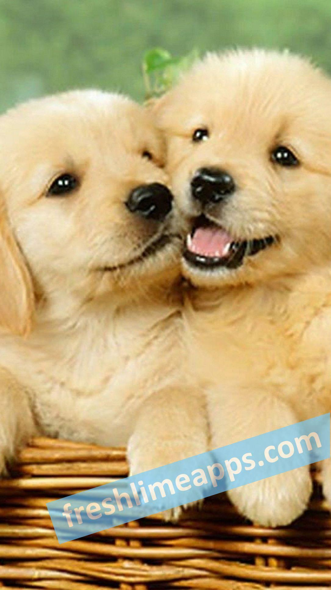 Cute Dogs Hd Wallpapers For Android Apk Download