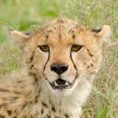 LJAX Land Animals icon