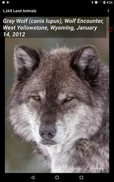 LJAX Land Animals screenshot 18