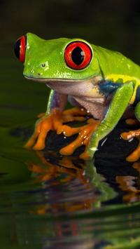 Frogs HD Wallpaper screenshot 12