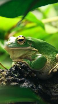 Frogs HD Wallpaper screenshot 13