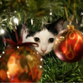 Advent Calendar Christmas Cats