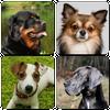 Icona Razze di cani