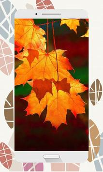Autumn Wallpapers and Backgrounds HD screenshot 1
