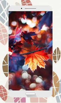 Autumn Wallpapers and Backgrounds HD screenshot 2