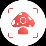 Picture Mushroom - Mushroom ID APK