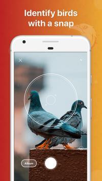 Picture Bird 海报
