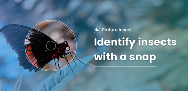 Picture Insect - Bug Identifier