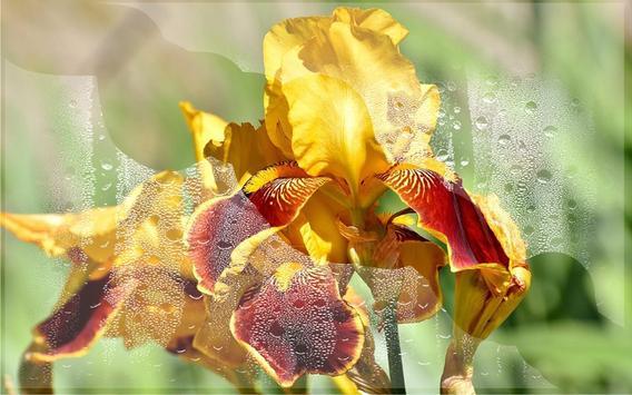 Irises Wild live wallpaper screenshot 12