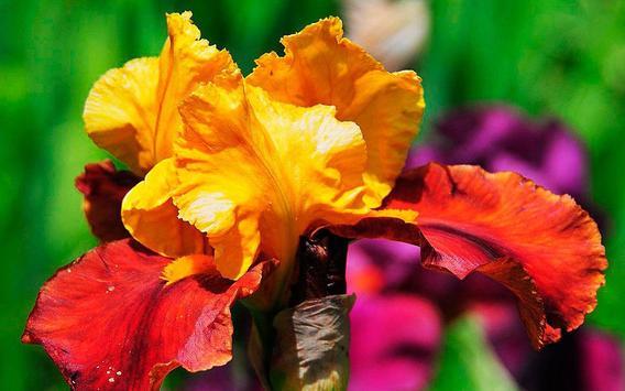 Irises Wild live wallpaper screenshot 6