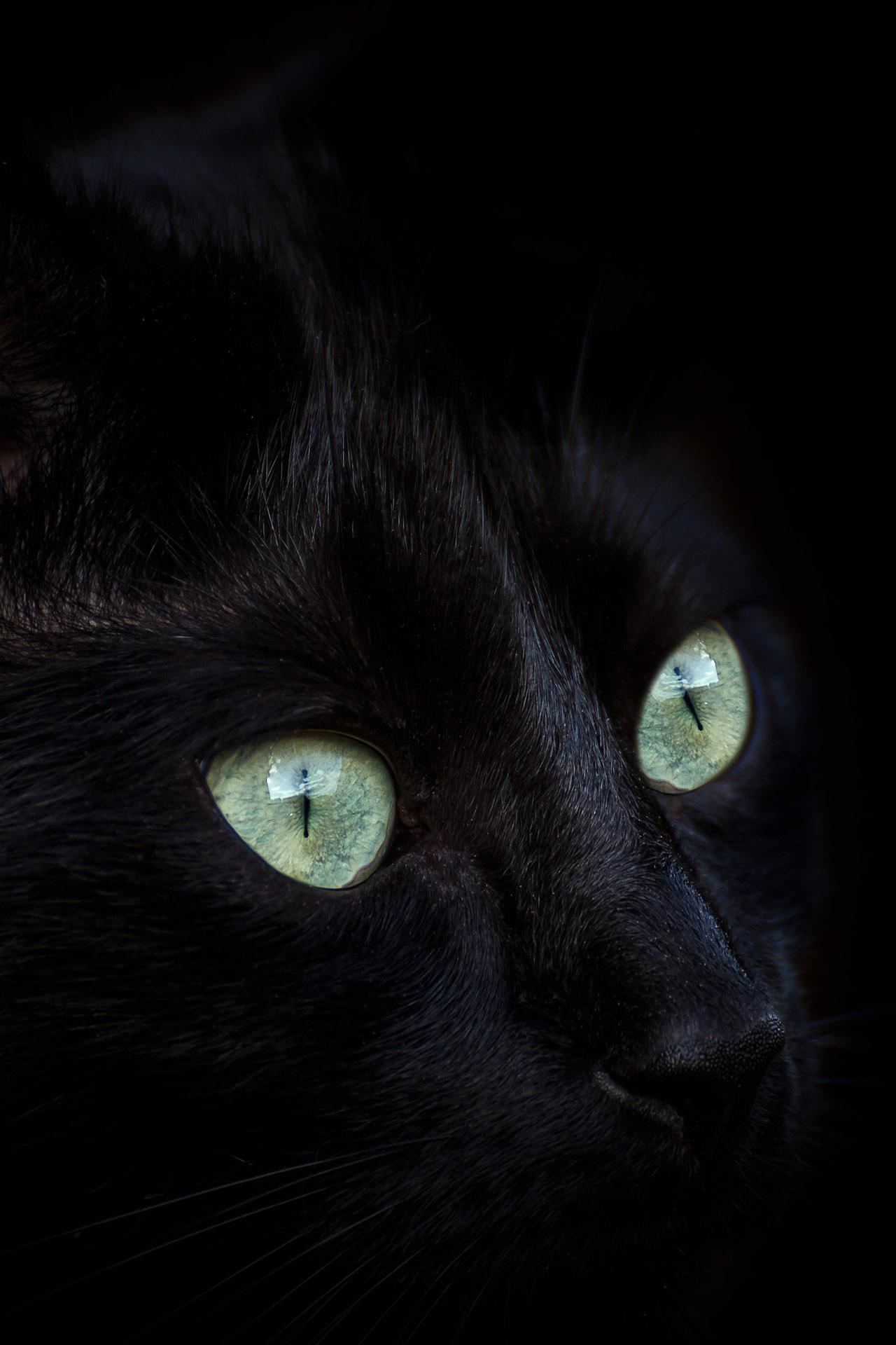 Black Cat Wallpaper Full Hd Backgrounds Themes For Android Apk Download
