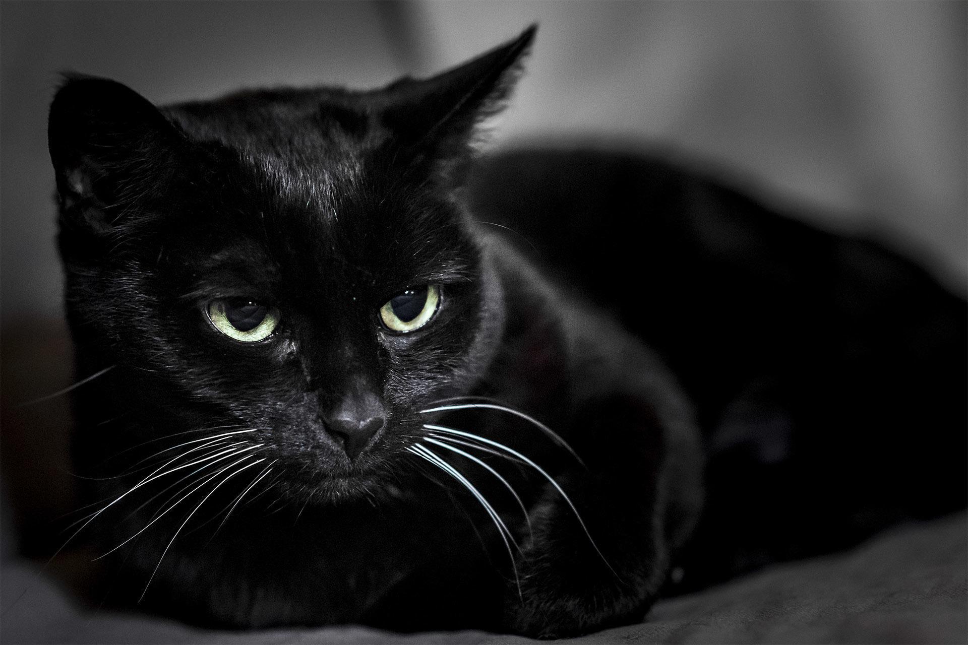 Black Cat Wallpaper Full HD (fondos y temas) for Android ...