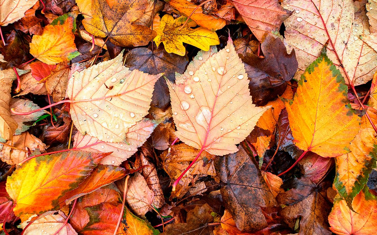 Autumn Leaves Wallpapers Full Hd For Android Apk Download