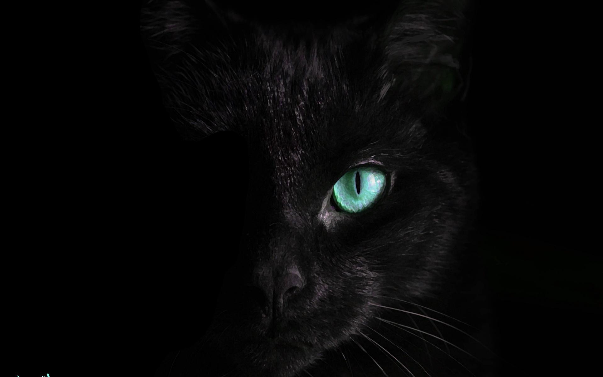 Black Cat Live Wallpaper For Android Apk Download