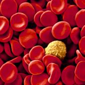 Manual Práctico de Hematología icon