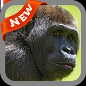Gorilla Wallpaper icon