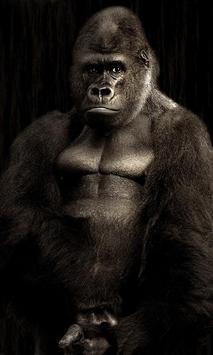 Gorilla Wallpaper poster