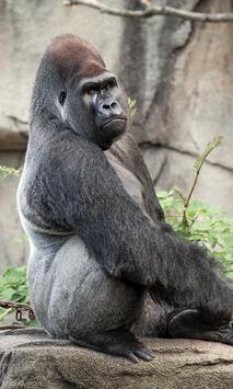 Gorilla Wallpaper screenshot 2