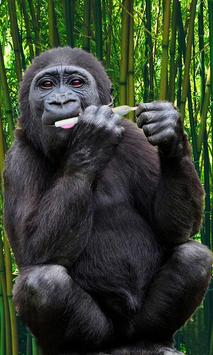 Gorilla Wallpaper screenshot 3