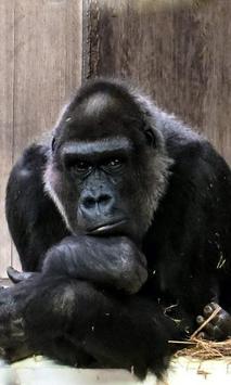 Gorilla Wallpaper screenshot 4