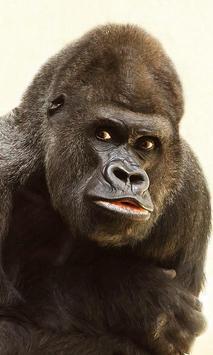Gorilla Wallpaper screenshot 5