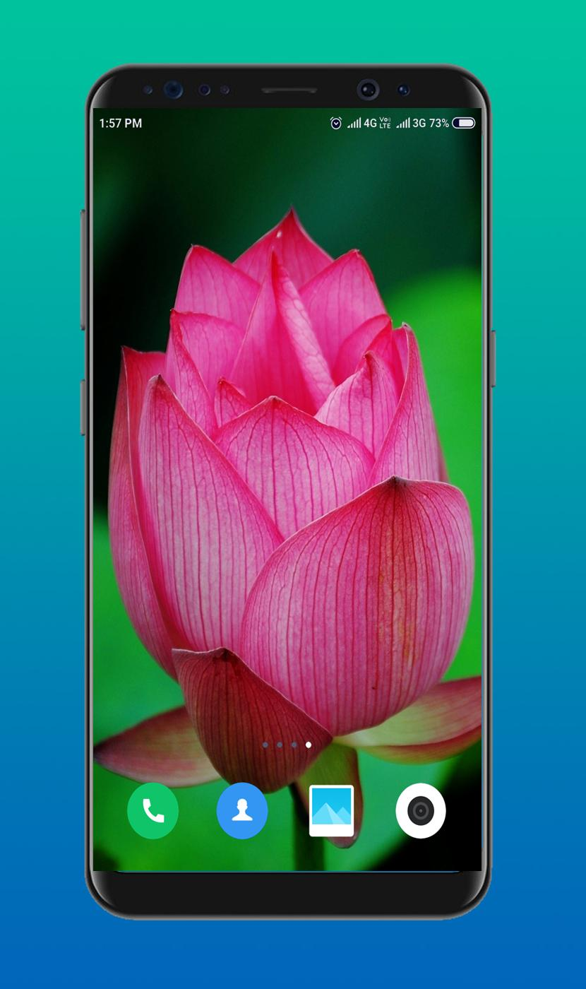 Lotus Wallpaper For Android Apk Download