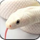 Snake Wallpaper HD APK