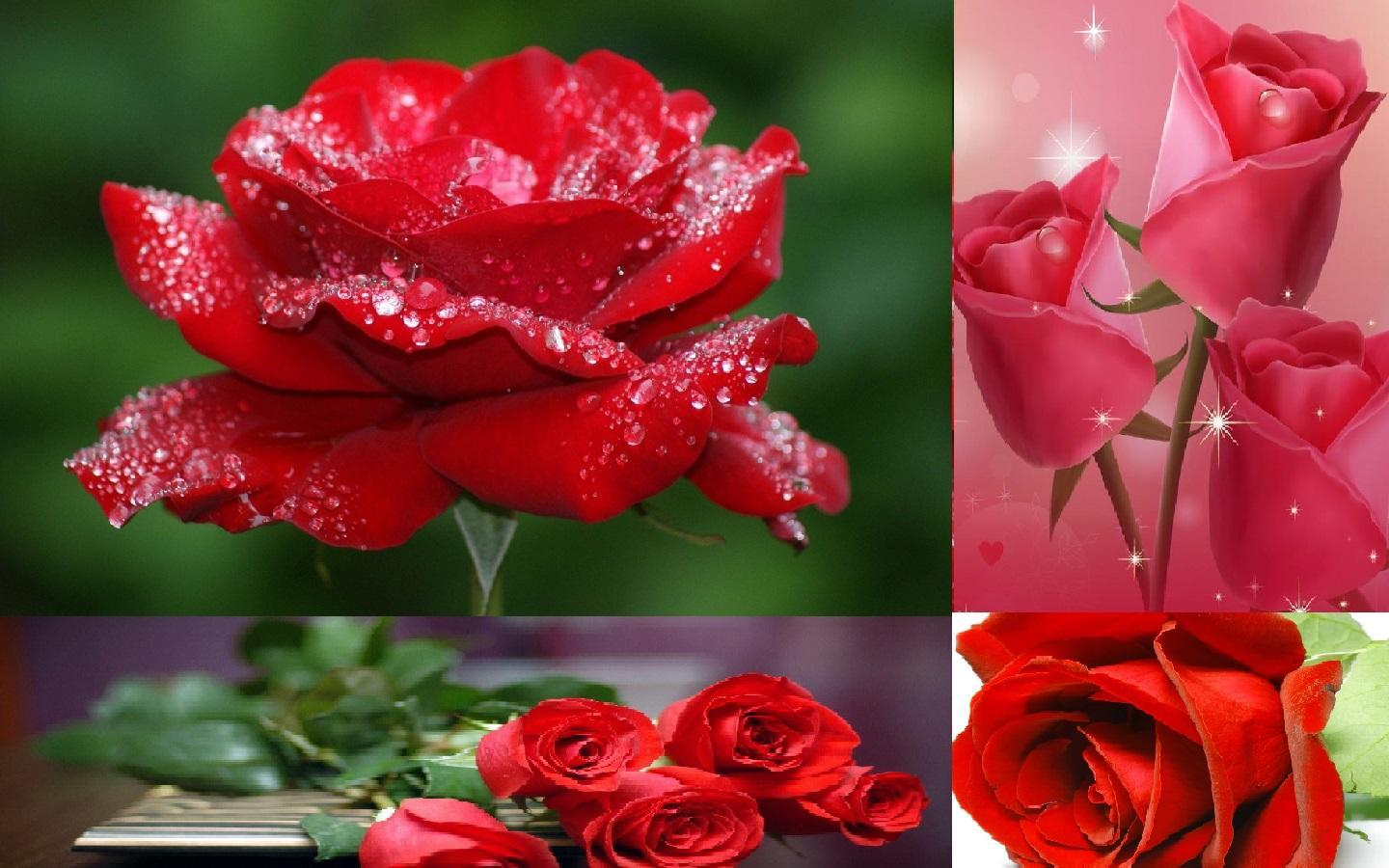 Rose Wallpaper For Android Apk Download