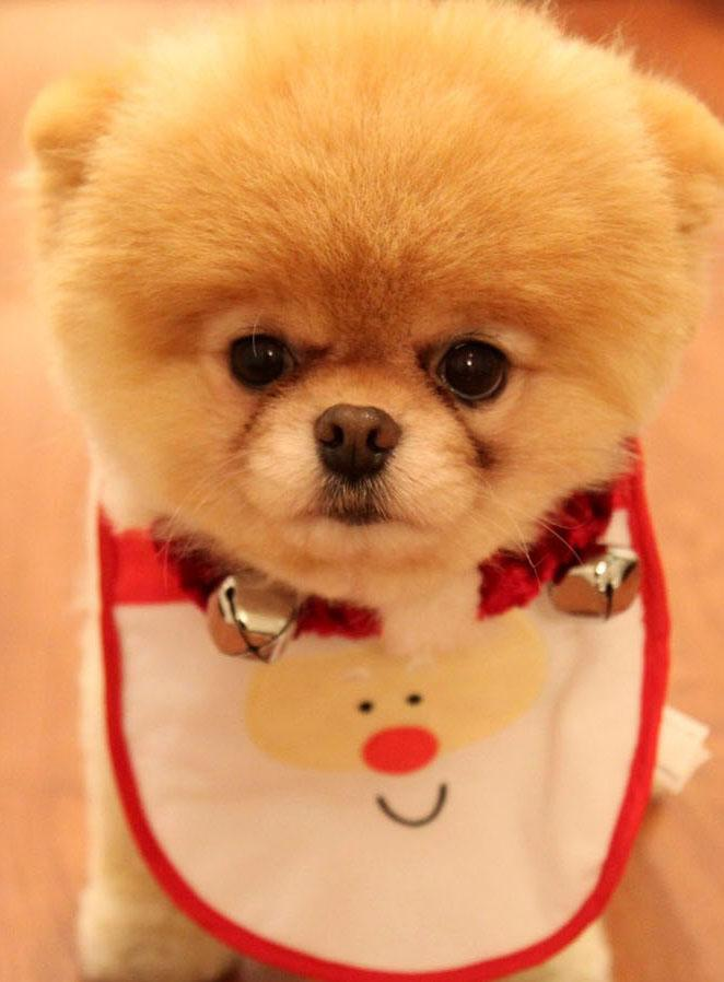 Puppy Wallpaper For Android Apk Download