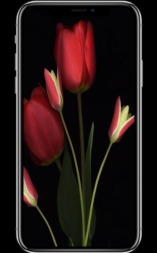Hd Tulip Wallpapers For Android Apk Download