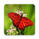 High Quality Butterfly Wallpaper APK