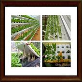 how to grow vegetables by hydroponics icon