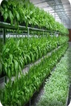 how to grow vegetables by hydroponics screenshot 11