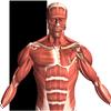 Visual Anatomy 2-icoon