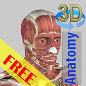 3D Bones and Organs (Anatomy) 图标
