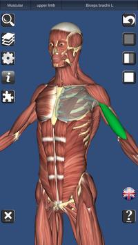 3D Bones and Organs (Anatomy) poster