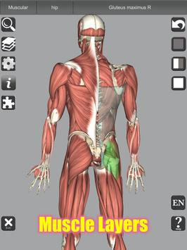 3D Bones and Organs (Anatomy) 截图 18