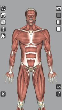 3D Bones and Organs (Anatomy) 截图 1