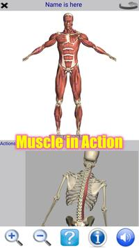 Poster Visual Anatomy Free