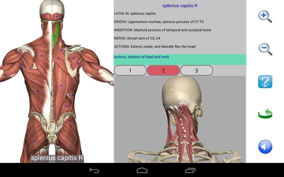 Visual Anatomy Free скриншот 17
