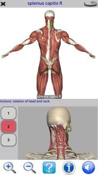 Visual Anatomy Free 截图 1
