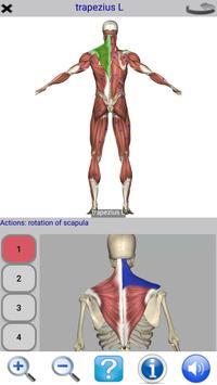 Visual Anatomy Free скриншот 3